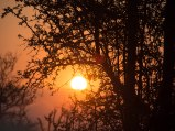Sunset framed by branches African bush