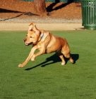 Gabby at Dog Park