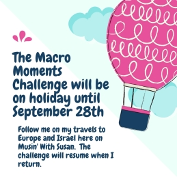 Macro Moments will be on holiday until September 28th