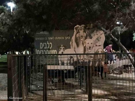Dog Park in Tel Aviv